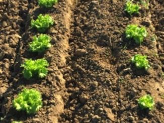 Sebze-Meyve Solucan Gübresi Sonuçları