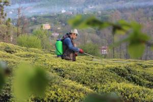 Çay Organik Solucan Gübresi