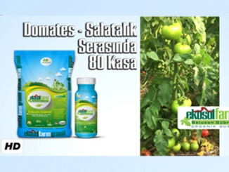 domates salatalikThumb