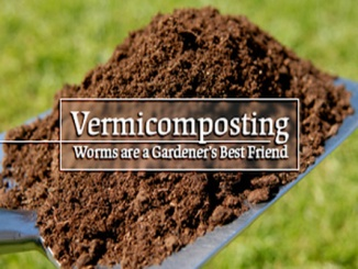Vermicomposting-Worms-are-farmers-friend