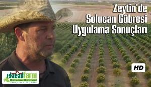 Zeytin Solucan Gubresi EkosolFarm